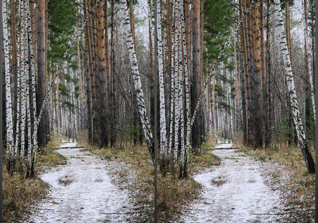 Алексей Фурсенко о стереофотографии